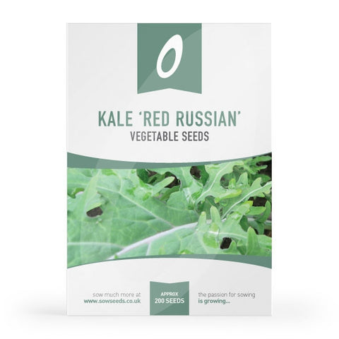 Kale Red Russian Seeds 'Borecole'