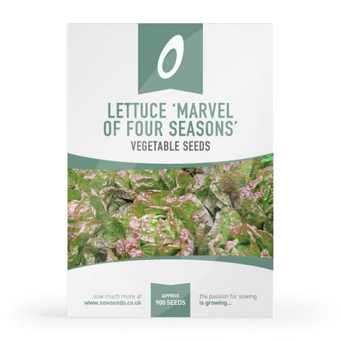 Lettuce Marvel of Four Seasons Seeds