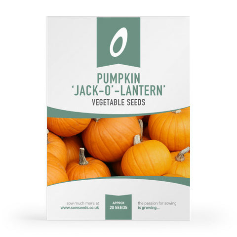 Pumpkin Jack Oäó» Lantern Vegetable Seeds