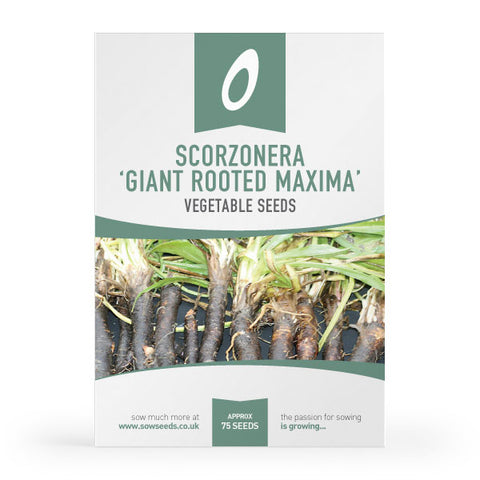 Scorzonera Giant Rooted Maxima Seeds