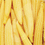 Sweetcorn Minipops F1 Seeds