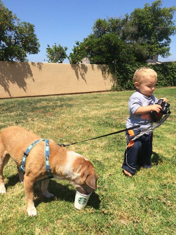 A 1 year old taking his best friend for a walk. 10 seconds of happiness
