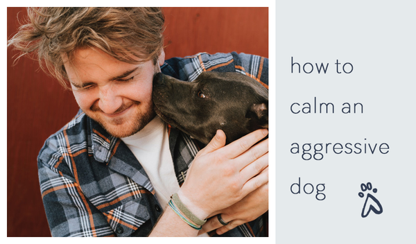 how-to-calm-an-aggressive-dog