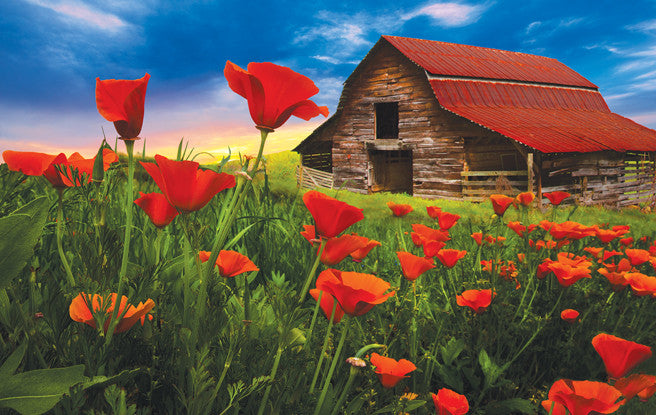Barn in Poppies Jigsaw Puzzle 550 Pieces Celebrate Life Gallery - Mr Puzzle Head
