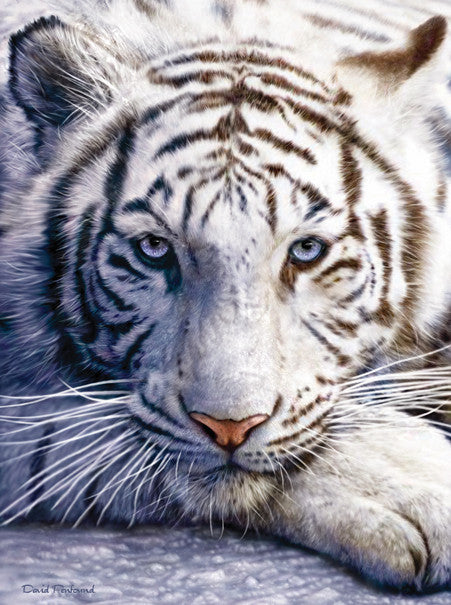 White Tiger Face Jigsaw Puzzle 1,000 Pieces David Penfound - Mr Puzzle Head