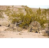 Crye Precision Compact Assault Ghillie Concealment Cover