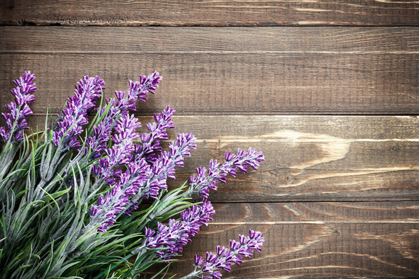 Lavender - That Really Fragrant, Purple Flower