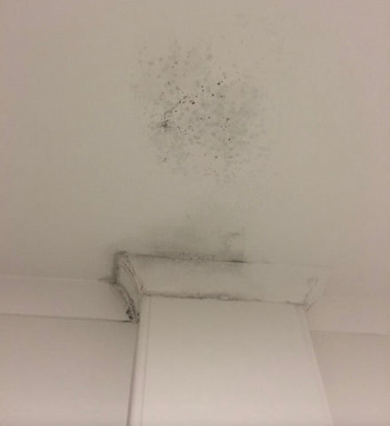 mould mold and eczema