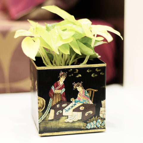 Nurturing Green Golden Pothos in Metallic cubic