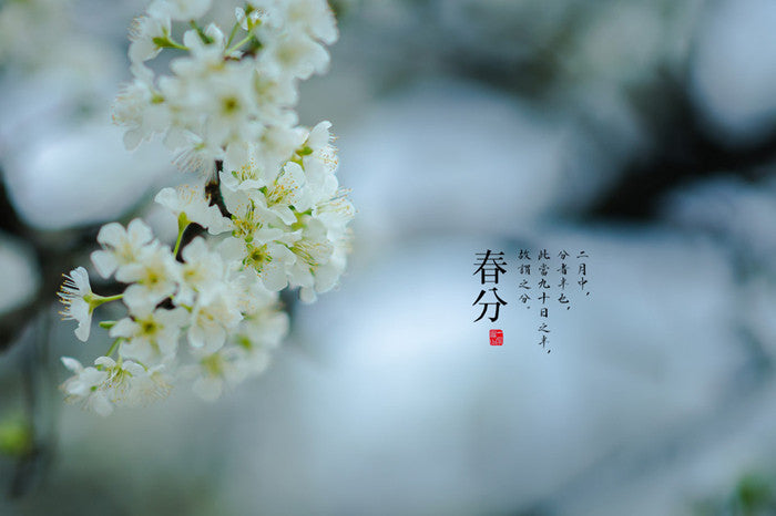 24 Solar Terms in China-the Spring Equinox