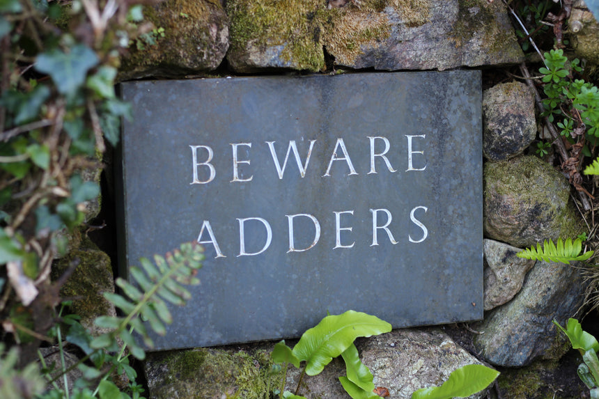 Sign near Lizard Point saying Beware Adders