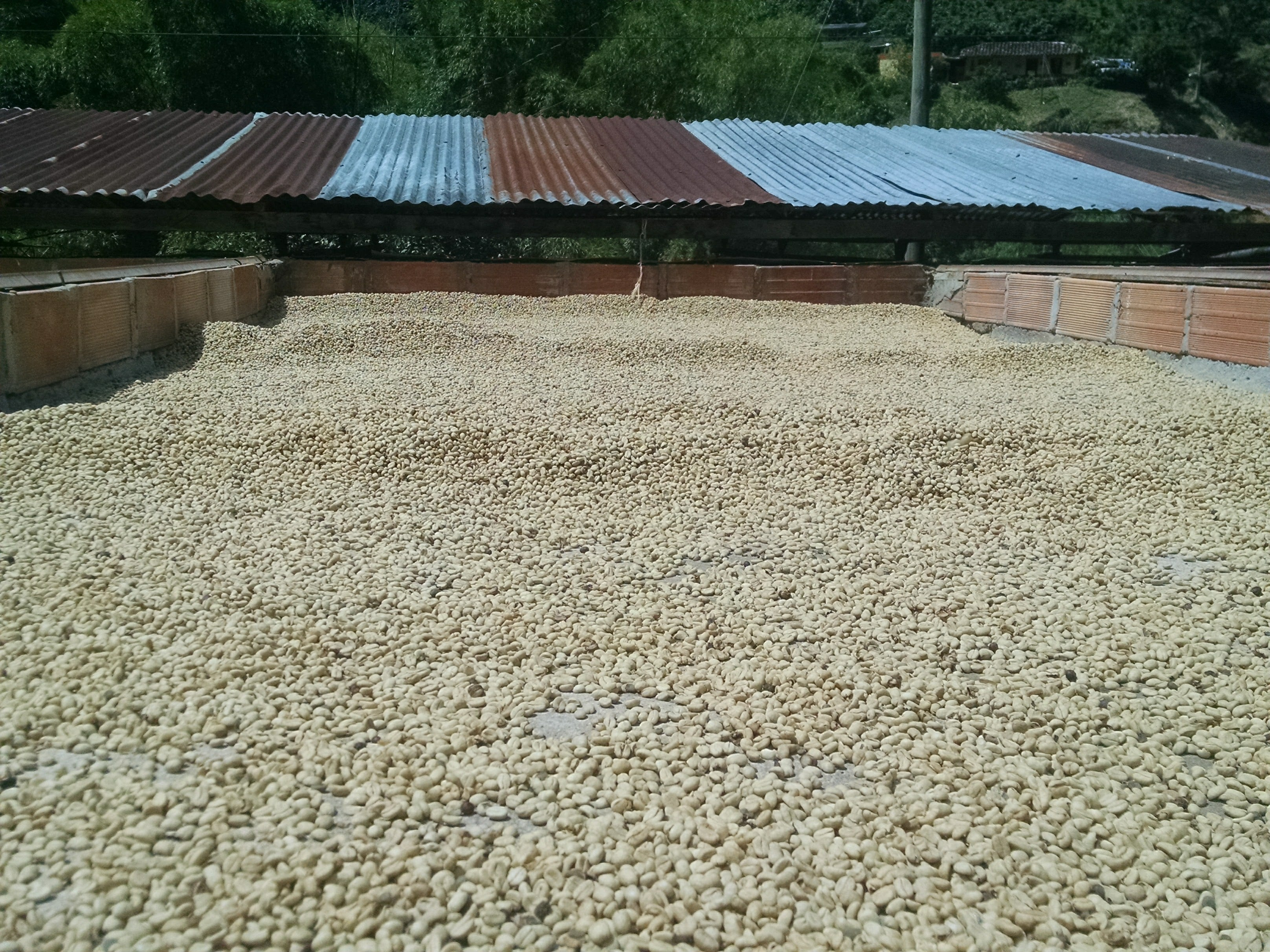 La Arboleda's sun drying space on roof, close up. Notice the thin layer and it has to be raked about every hour