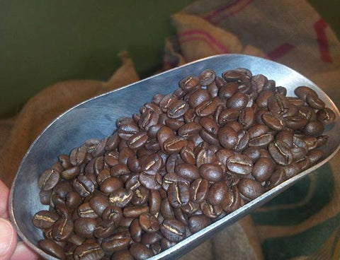 FosterHobbs Coffee Roaster Shows Scoop of Just Roasted Coffee Beans
