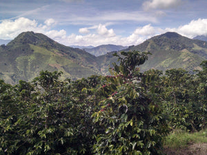 coffee farming colombia