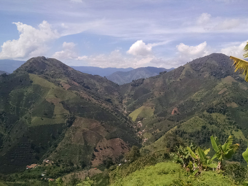 La Arboleda Coffee Farm Colombia