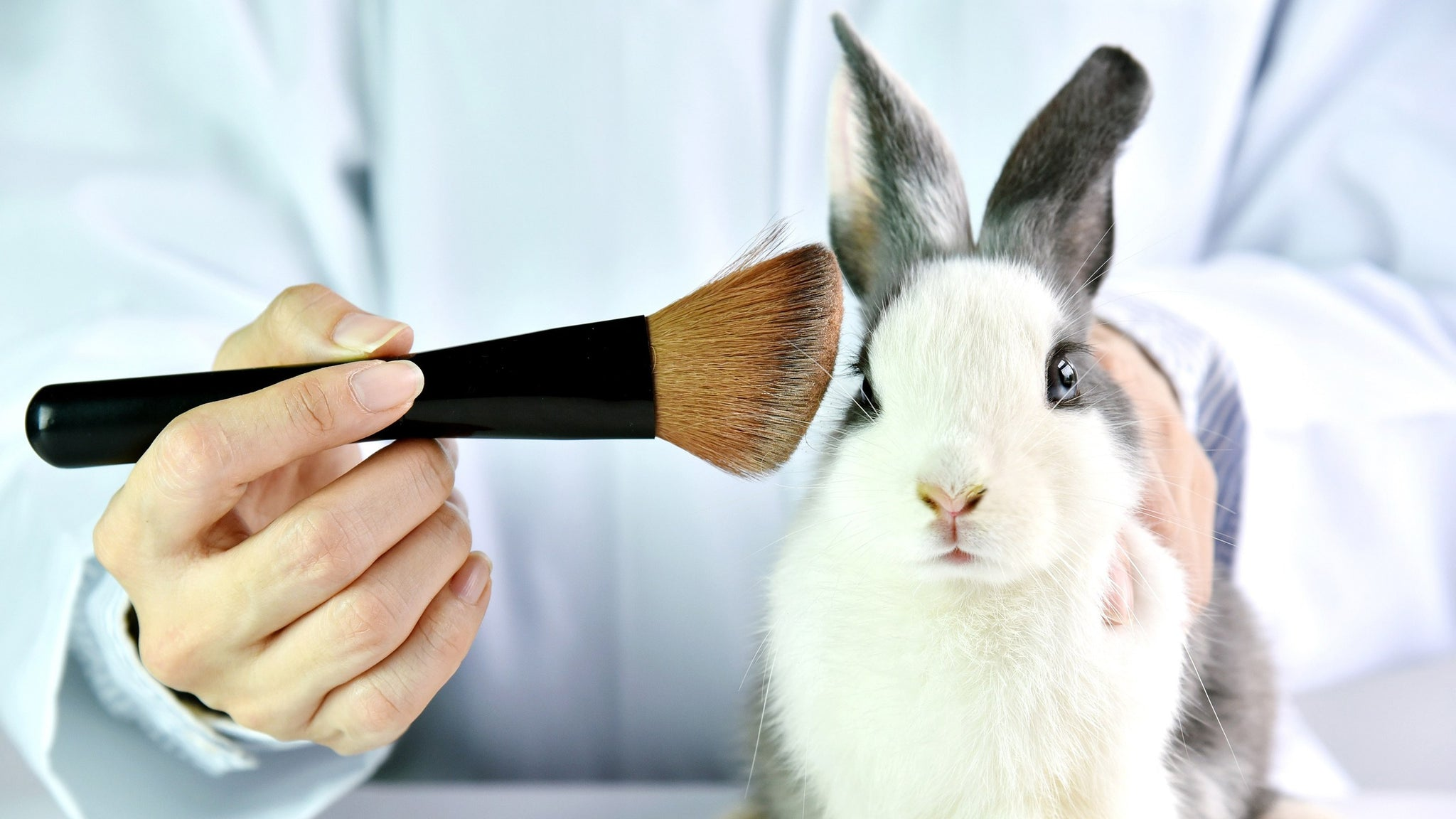 Start using animal cruelty-free products