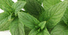 Uses and Benefits of organic Peppermint essential oil