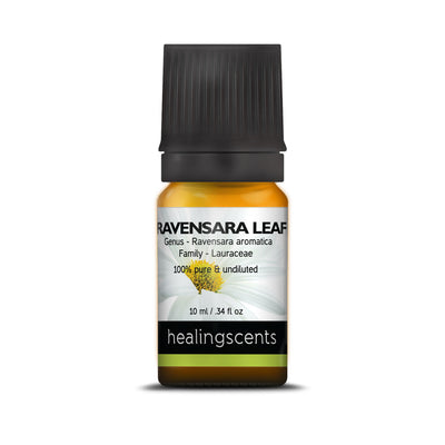 Ravensara Leaf Essential Oil 10 ml