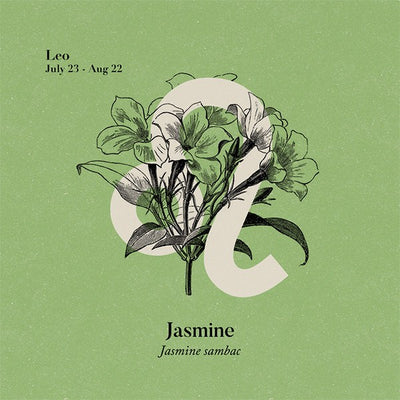 Essential Oil - Jasmine Essential Oil