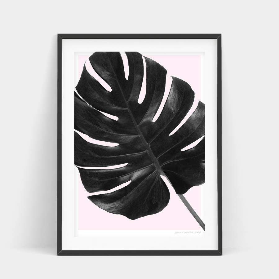 BLUSH MONSTERA