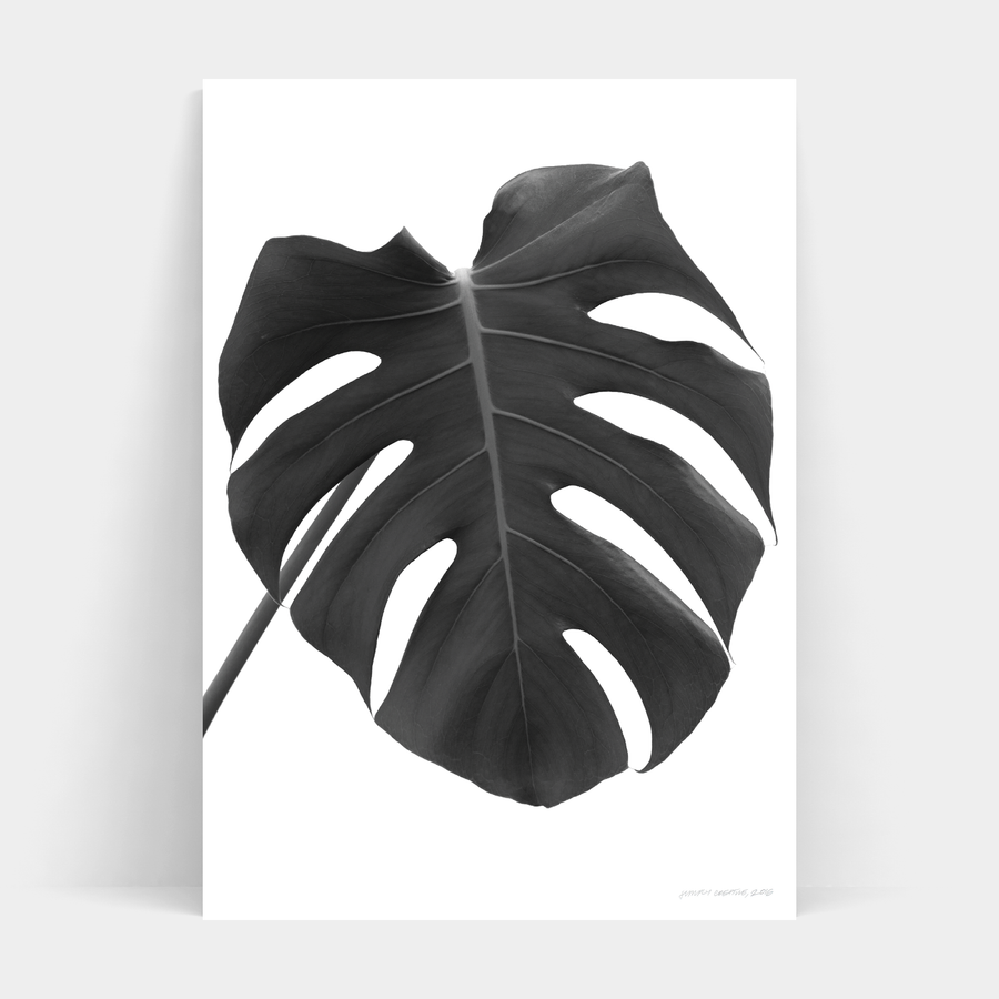 MONOCHROME MONSTERA