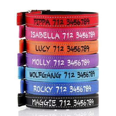 Deluxe Buckle Style Personalised Dog Collar - Soft Padded Nylon & Neoprene