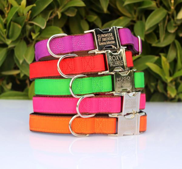 personalized dog collar metal buckle nylon and coloured ribbon