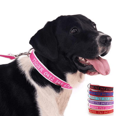 Personalized Embroidered Collar - Made from Organic Bamboo Webbing
