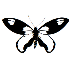 Butterfly Icon Address Labels on Sheets
