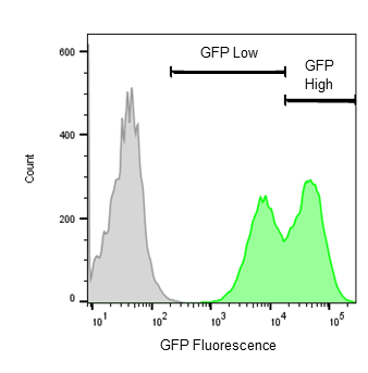 eGFP flow cytometry