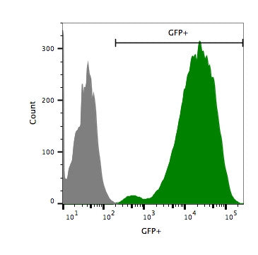 Flow cytometry, eGFP