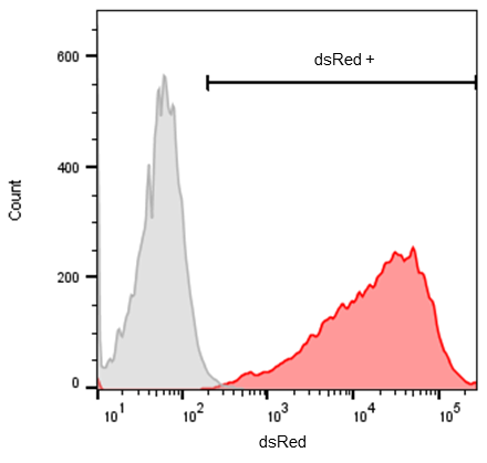 dsRed RFP flow cytometry