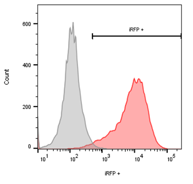 flow cytometry iRFP