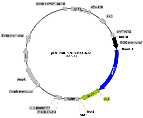 plasmid map pgk mnis puro