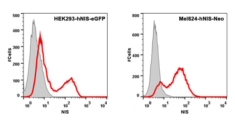 Flow cytometry of sodium iodide symporter (NIS) expressing HEK293 and Mel624 cell lines with anti-NIS antibody VJ2
