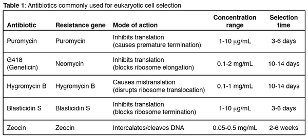 Common antibiotics for eukaryotic cell selection