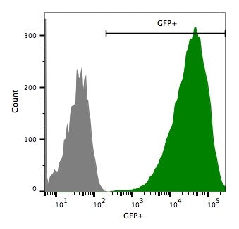 hepa1-6 fluc-neo/eGFP-puro transduced cell flow cytometry