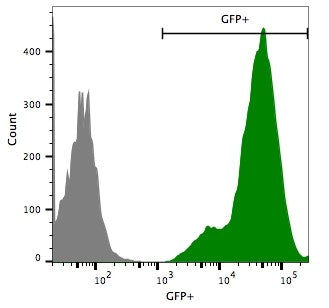 Flow cytometry eGFP-puro transduced Hepa1-6 cells