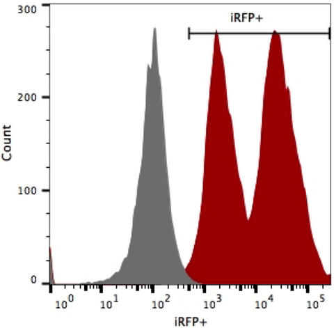 Flow cytometry for iRFP shows high expression levels in HT1080-hNIS-Neo/iRFP-Puro cells