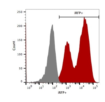 Flow cytometry shows high iRFP expression in 4T1-Fluc-Neo/iRFP-Puro cells