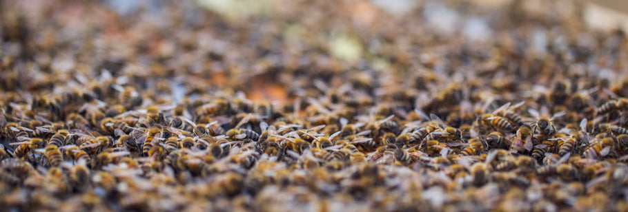 3 Ways Propolis is the New Cure-All