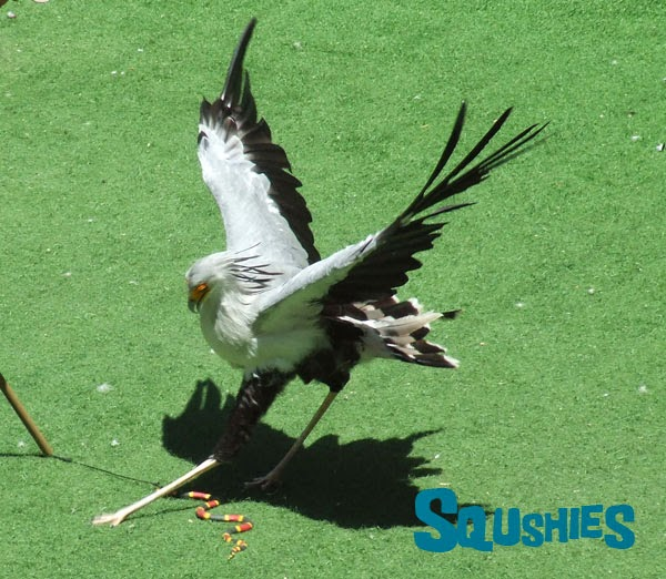 Secretary bird striking