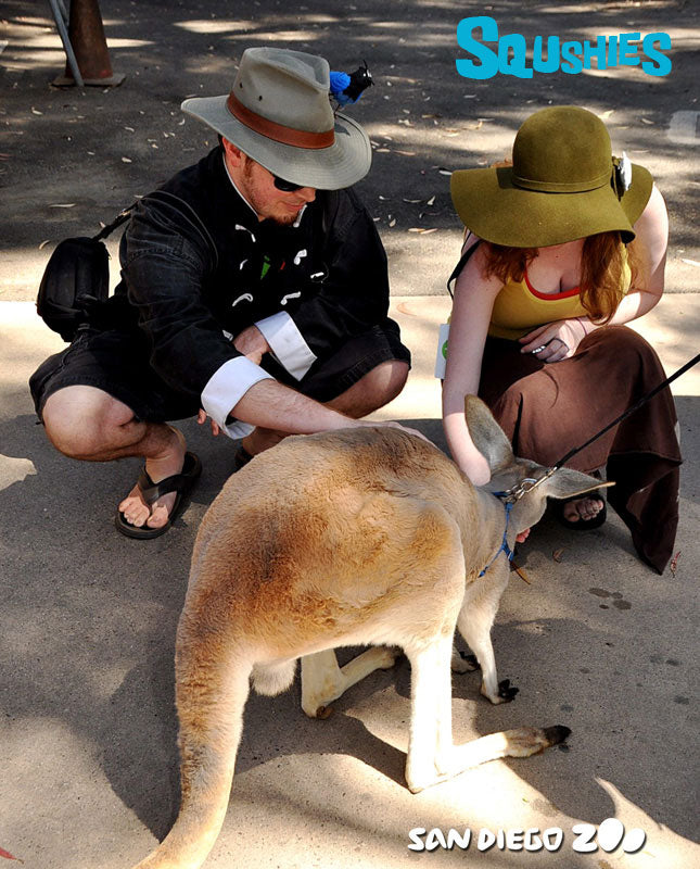 meeting a kangaoo