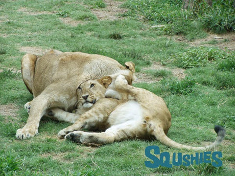 young lions wrestling