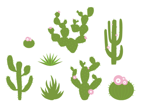 desert plant wall stickers