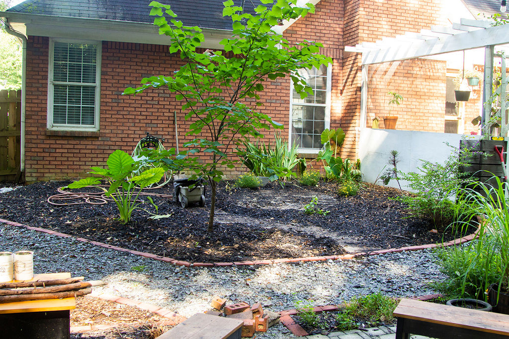 A segment of garden covered in black mulch sitting right against a red brick home. The garden is outlined in red bricks as well with a eastern rosebud tree and elephant ears prominently on one side with a white pergola on the other.