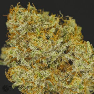 Huckleberry Cough