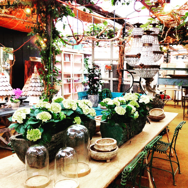 Petersham Nurseries – London Garden Centre – Floral Inspiration for Abstract Flower Paintings by London Artist