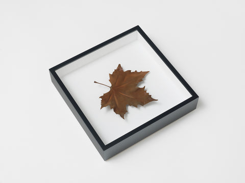 Elmgreen & Dragset | Single Leaves (2018)