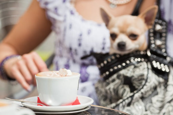 Dog Handbag Coffee